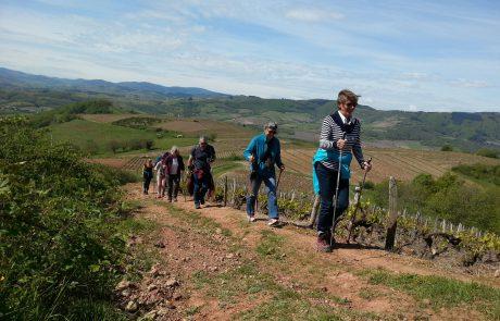 marche nordique dans le beaujolais des pierres dorées